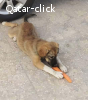 Female dog 4 month old in althumama