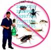 ابادة الحشرات والزواحف والقوارض