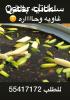 حلواتنا العمانيه متوفره الان