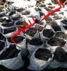 مصر دمياط الجديدة كفر البطيخ