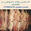 مؤسسة اللحوم من كازاخستان تبحث عن مشتريي الجملة