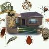 مكافحه الحشرات والنمل والصراصير